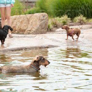 hondenzwemvijver